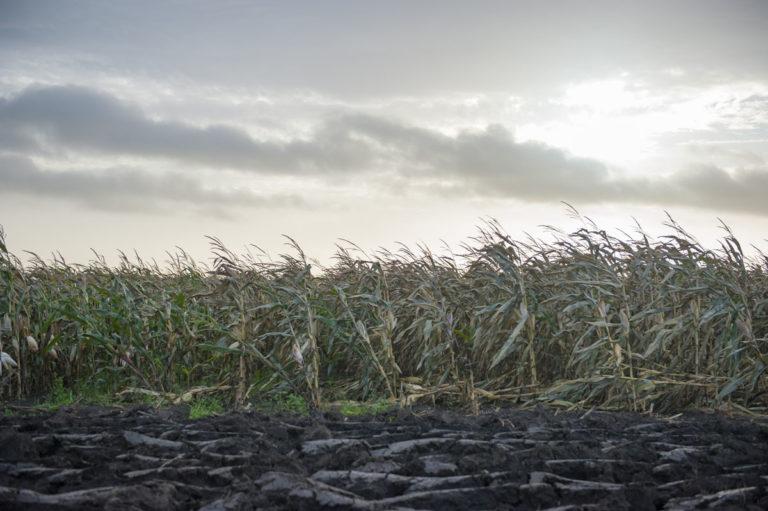 Coelliac Wheat Nutritional Evidence