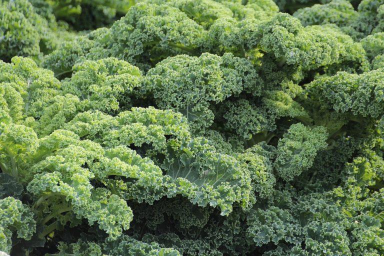 Dine Kale Superfoord